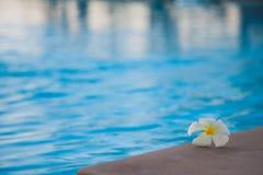 在游泳池的花 免版税库存照片