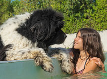在游泳池的青少年和纽芬兰狗 库存照片