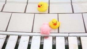 在游泳池边的玩具 股票录像