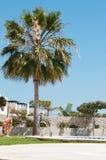 在游泳池附近的棕榈树 库存图片