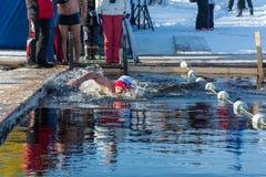 在游泳的竞争在冰水,在节日冬天fu 免版税库存图片