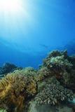 在游泳露胸部的妇女的珊瑚礁之上 免版税库存图片