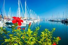 在游艇端口的红色花,选择聚焦 库存图片