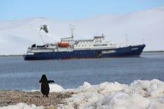 在游轮前面的Chinstrap企鹅在南极洲 免版税库存照片