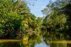 在湄公河三角洲的小运河 图库摄影
