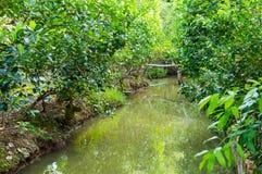 在湄公河三角洲的小运河 免版税库存图片