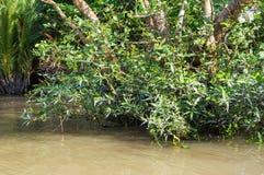 在湄公河三角洲的小运河 免版税库存照片