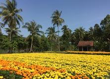 在湄公河三角洲,越南的农村场面 库存图片