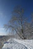 在湖、雾和霜的冷淡的早晨在草 库存照片