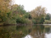 在湖上的树有基于木头的野鸭的 免版税库存图片