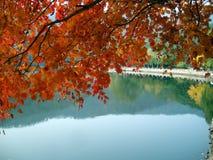 在湖上的秋叶 免版税库存图片