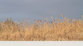 在湖上的美好的多雪的天 影视素材