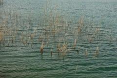 在湖中02的蓝绿色水增长的草 库存照片