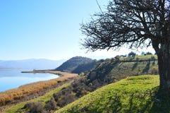 在湖前面的树 免版税图库摄影