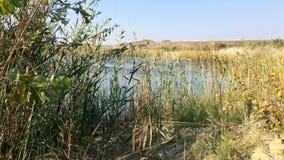 在湖前面的植被 影视素材