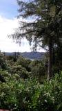 在湖区的树 免版税库存照片