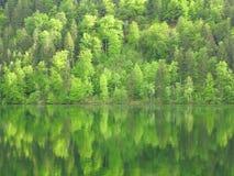 在湖反射的森林山坡 库存照片