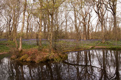 在湖反映的会开蓝色钟形花的草 免版税库存图片