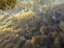 在湖反映的天空 免版税库存照片