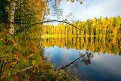在湖反映的树 秋天横向 图库摄影