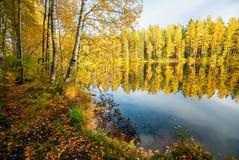在湖反映的树 秋天横向 库存图片