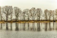 在湖反映的树 免版税库存图片