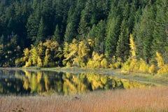 在湖反映的秋天叶子 库存照片
