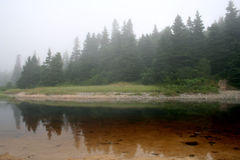 在湖反映的结构树 免版税库存照片