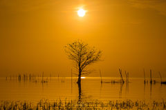 在湖和不生叶的树的日出 免版税库存图片