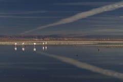 在湖和天空反映的火鸟 库存图片