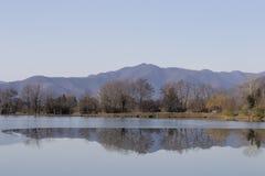 在湖和山反映的树 免版税库存图片