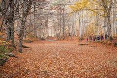 在湖和秋天风景的叶子 免版税库存图片