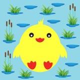 在湖和芦苇背景的鸭子  免版税库存图片