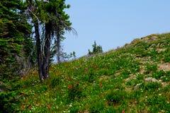 在湖山附近山顶的野花  免版税库存图片