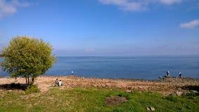 在湖岸的偏僻的树  免版税图库摄影