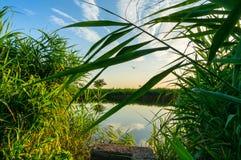 在湖岸的密集的植被 免版税库存图片