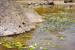 在湖岸的岩石在美好的晴天 免版税库存照片
