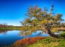 在湖岸的树  库存图片