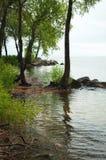 在湖岸的树 免版税库存图片
