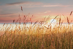 在湖岸的海杂草,与在湖的雾,日出的 图库摄影