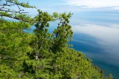 在湖岸的针叶树  库存图片