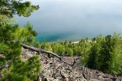 在湖岸的针叶树  库存照片