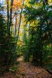 在湖岸被生动描述的岩石国民的森林足迹, Munising, MI 图库摄影