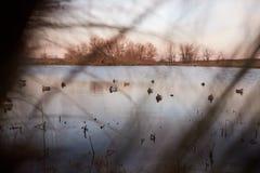 在湖或假的水鸟部署的诱饵 免版税库存图片