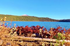 在湖旁边的五颜六色的红色秋天植物 库存图片