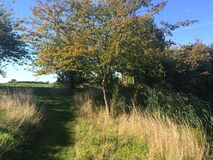 在湖旁边的树在Coggeshall附近在艾塞克斯 库存照片
