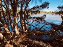 在湖旁边的树 免版税库存照片