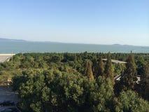 在湖旁边的树 免版税库存图片
