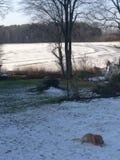 在湖旁边的狗 免版税库存照片