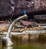 在湖旁边的美丽的灰鼠鸟 免版税库存图片